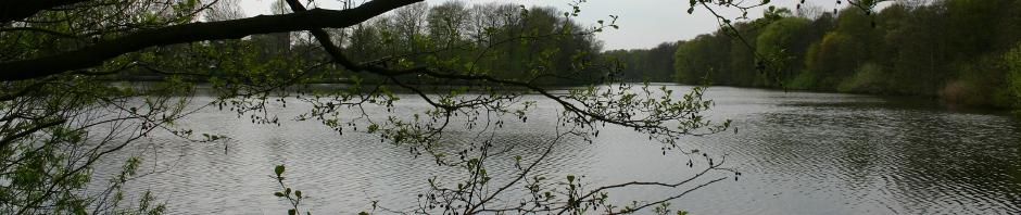 Bramfelder See Kopf