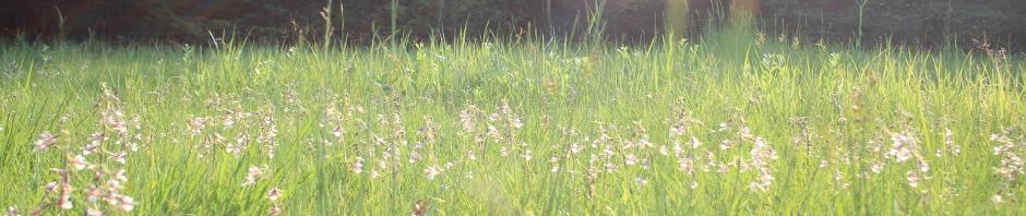 Epipactis palustris Standort